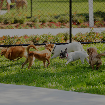 Large Dog Park at Hightower Apartments